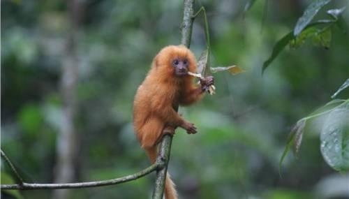 «Σε εξέλιξη» η έκτη μαζική εξαφάνιση ειδών στον πλανήτη Γη!